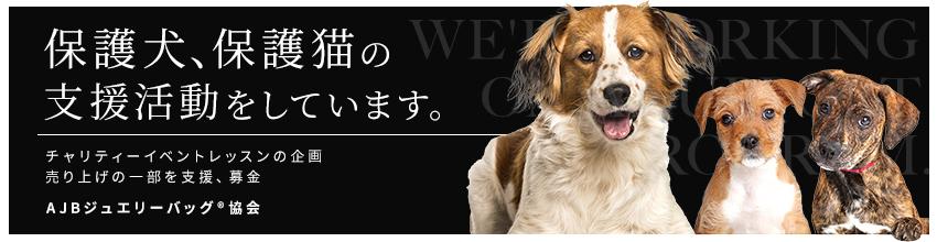 保護犬・保護猫の支援活動をしています